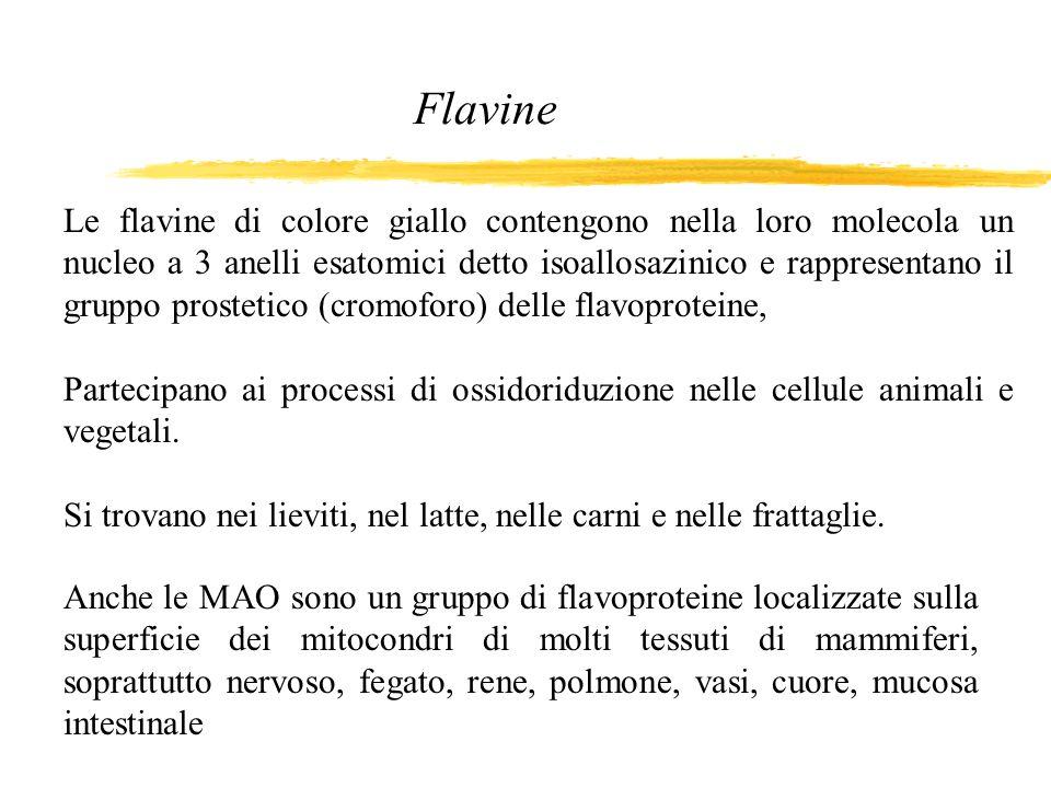 Flavine Le flavine di colore giallo contengono nella loro molecola un nucleo a 3 anelli esatomici detto isoallosazinico e rappresentano il gruppo pros