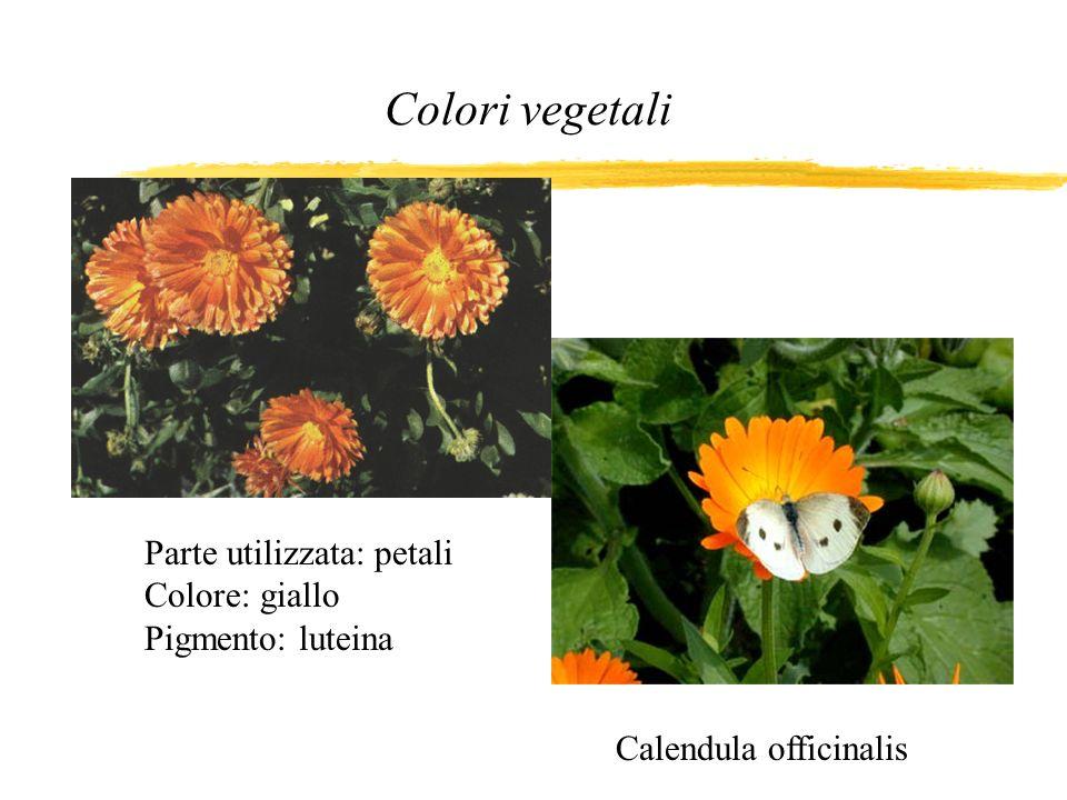 Colori vegetali Calendula officinalis Parte utilizzata: petali Colore: giallo Pigmento: luteina