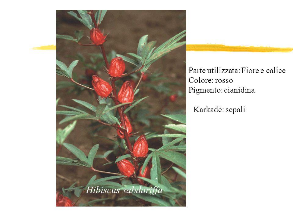 Hibiscus sabdariffa Karkadè: sepali Parte utilizzata: Fiore e calice Colore: rosso Pigmento: cianidina