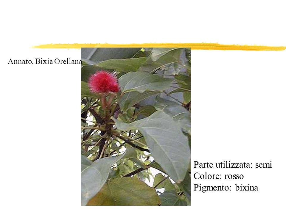 Annato, Bixia Orellana Parte utilizzata: semi Colore: rosso Pigmento: bixina