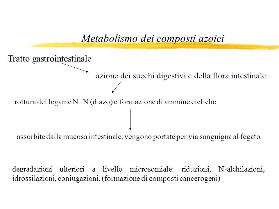 Metabolismo dei composti azoici degradazioni ulteriori a livello microsomiale: riduzioni, N-alchilazioni, idrossilazioni, coniugazioni. (formazione di