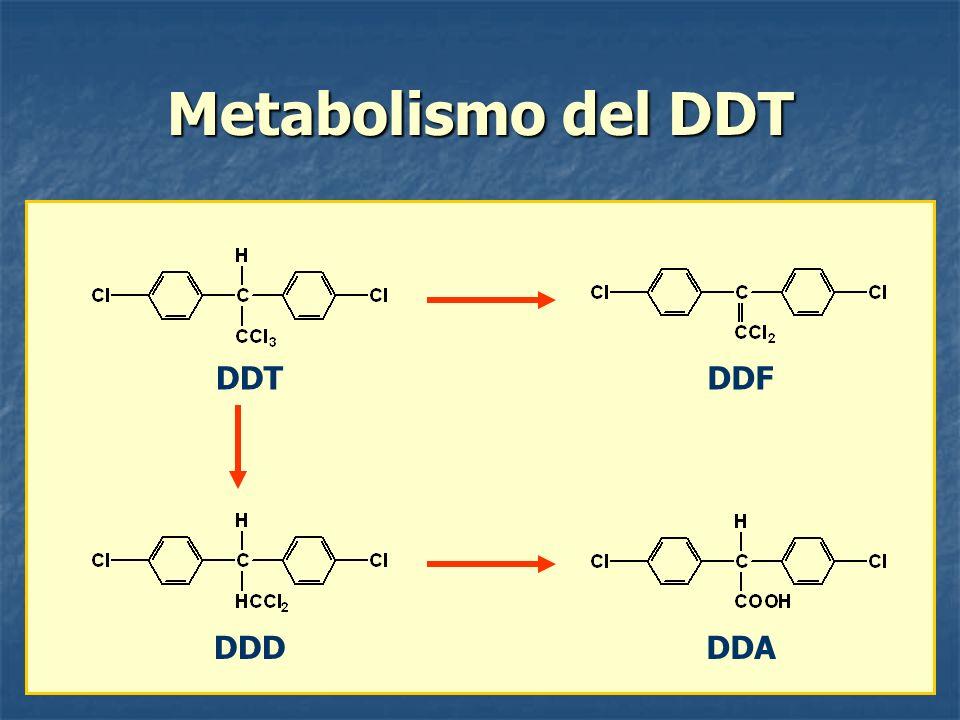 Metabolismo del DDT DDTDDF DDDDDA