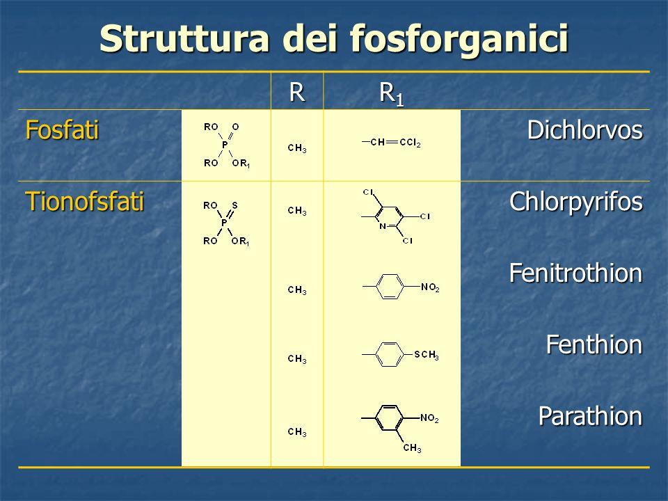 Struttura dei fosforganici R R1R1R1R1 FosfatiDichlorvos TionofsfatiChlorpyrifos Fenitrothion Fenthion Parathion