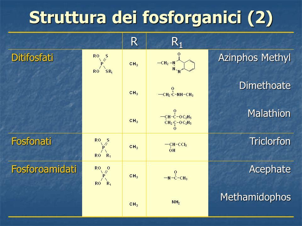 Struttura dei fosforganici (2) R R1R1R1R1Ditifosfati Azinphos Methyl Dimethoate Malathion FosfonatiTriclorfon FosforoamidatiAcephate Methamidophos