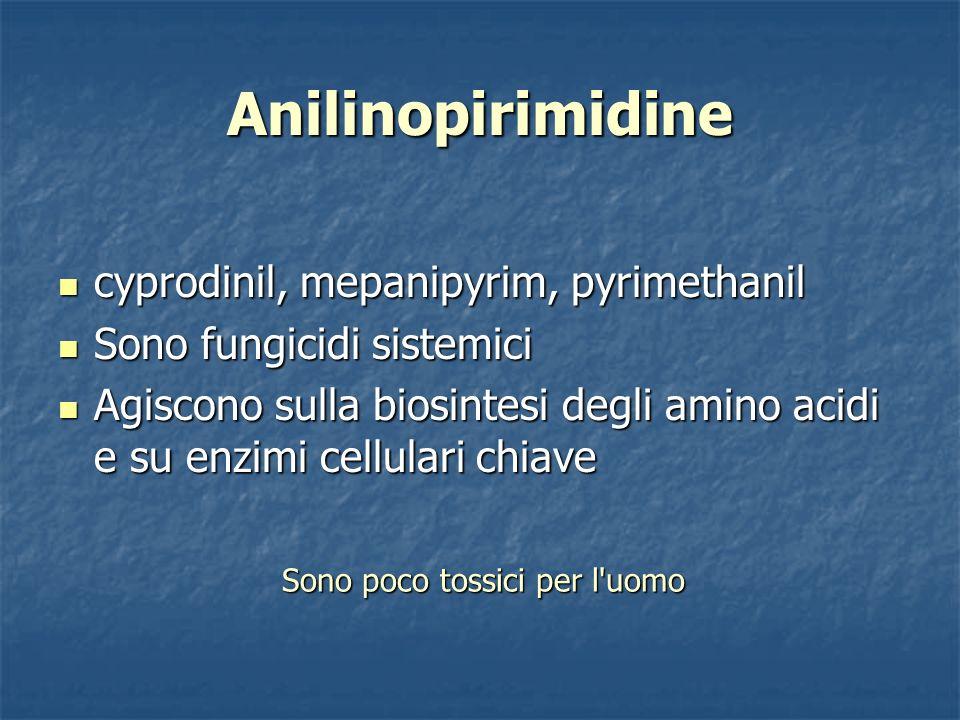 Anilinopirimidine cyprodinil, mepanipyrim, pyrimethanil cyprodinil, mepanipyrim, pyrimethanil Sono fungicidi sistemici Sono fungicidi sistemici Agisco