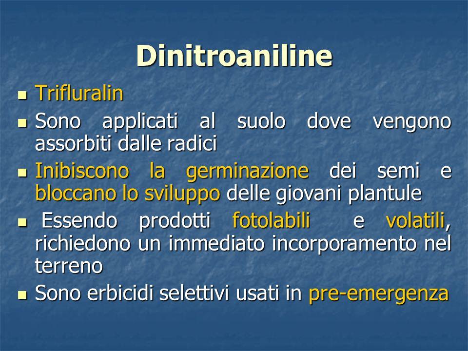 Dinitroaniline Trifluralin Trifluralin Sono applicati al suolo dove vengono assorbiti dalle radici Sono applicati al suolo dove vengono assorbiti dall