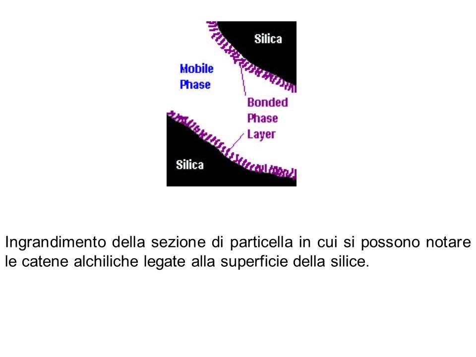 Ingrandimento della sezione di particella in cui si possono notare le catene alchiliche legate alla superficie della silice.