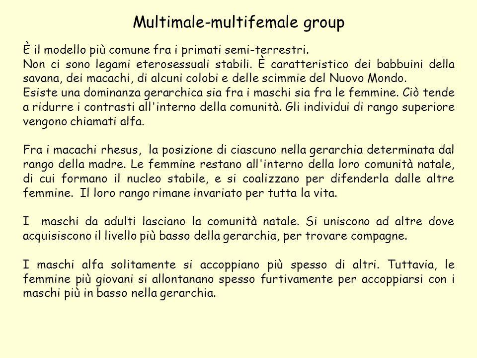 Multimale-multifemale group È il modello più comune fra i primati semi-terrestri.