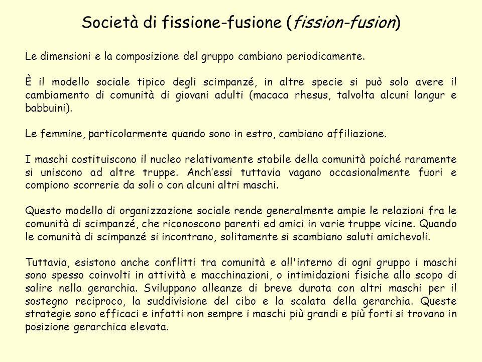 Società di fissione-fusione (fission-fusion) Le dimensioni e la composizione del gruppo cambiano periodicamente.