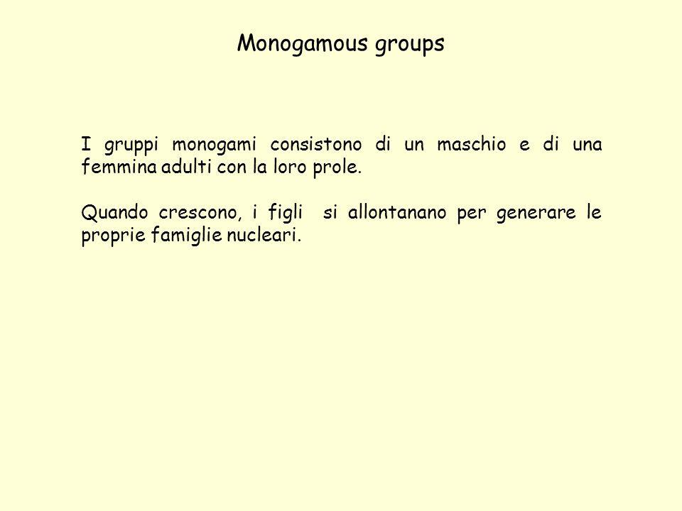 Monogamous groups I gruppi monogami consistono di un maschio e di una femmina adulti con la loro prole.