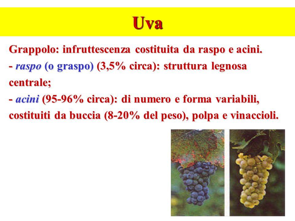 Uva Grappolo: infruttescenza costituita da raspo e acini. - raspo (o graspo) (3,5% circa): struttura legnosa centrale; - acini (95-96% circa): di nume