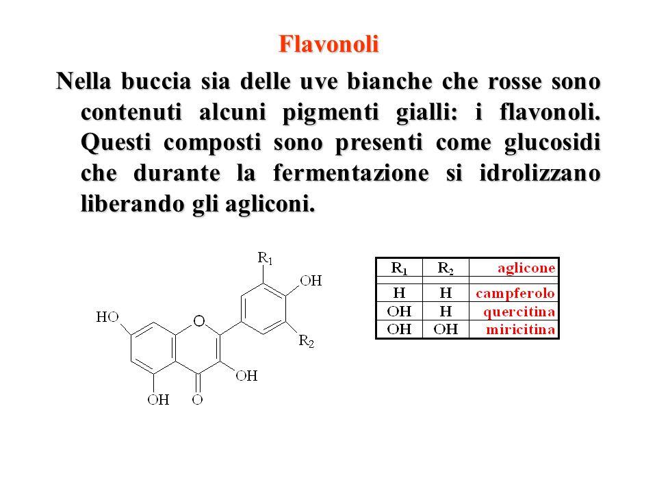 Flavonoli Nella buccia sia delle uve bianche che rosse sono contenuti alcuni pigmenti gialli: i flavonoli. Questi composti sono presenti come glucosid