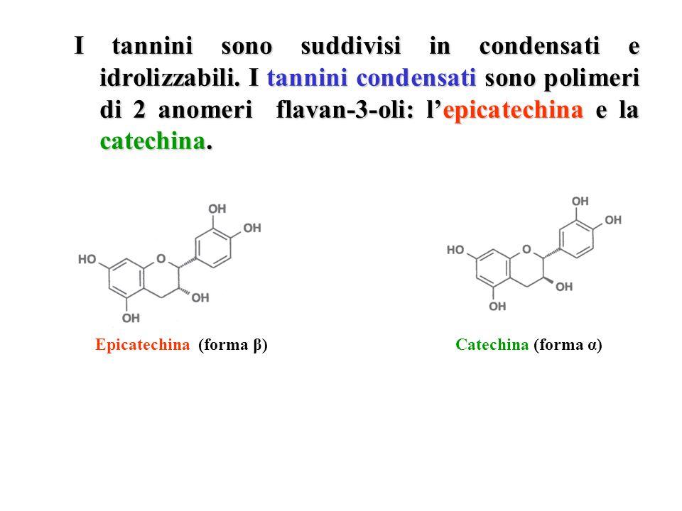 I tannini sono suddivisi in condensati e idrolizzabili. I tannini condensati sono polimeri di 2 anomeri flavan-3-oli: lepicatechina e la catechina. Ep