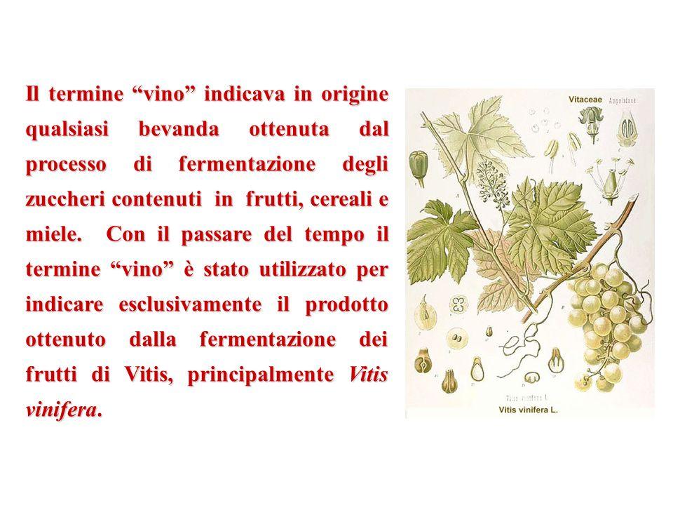 Il termine vino indicava in origine qualsiasi bevanda ottenuta dal processo di fermentazione degli zuccheri contenuti in frutti, cereali e miele. Con