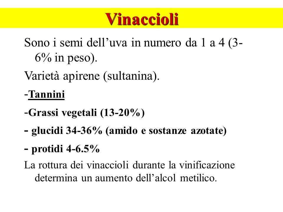Vinaccioli Sono i semi delluva in numero da 1 a 4 (3- 6% in peso). Varietà apirene (sultanina). - Tannini - Grassi vegetali (13-20%) - glucidi 34-36%