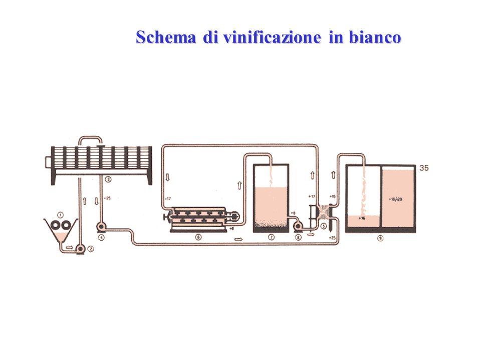 Schema di vinificazione in bianco