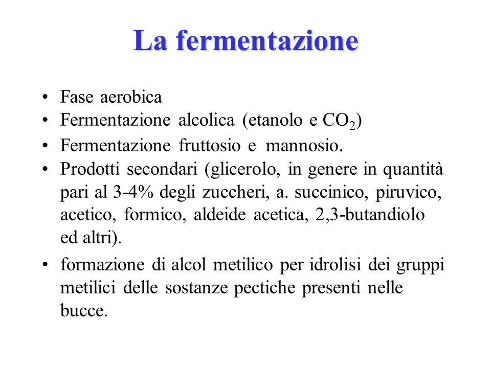 La fermentazione Fase aerobica Fermentazione alcolica (etanolo e CO 2 ) Fermentazione fruttosio e mannosio. Prodotti secondari (glicerolo, in genere i