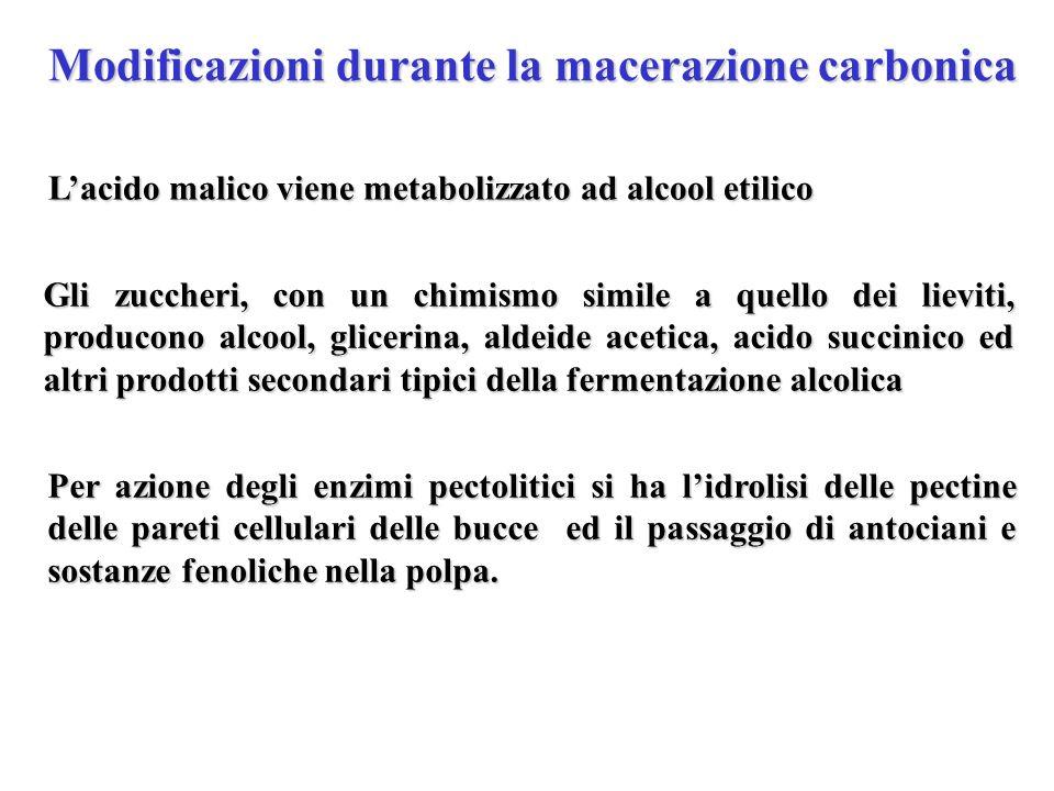 Modificazioni durante la macerazione carbonica Lacido malico viene metabolizzato ad alcool etilico Gli zuccheri, con un chimismo simile a quello dei l