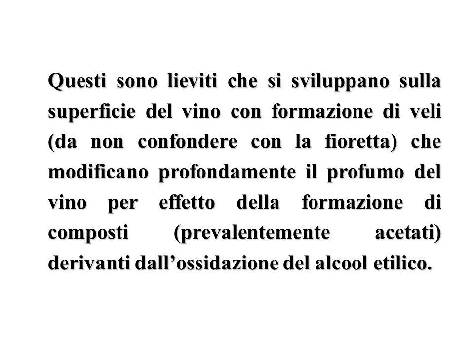 Questi sono lieviti che si sviluppano sulla superficie del vino con formazione di veli (da non confondere con la fioretta) che modificano profondament