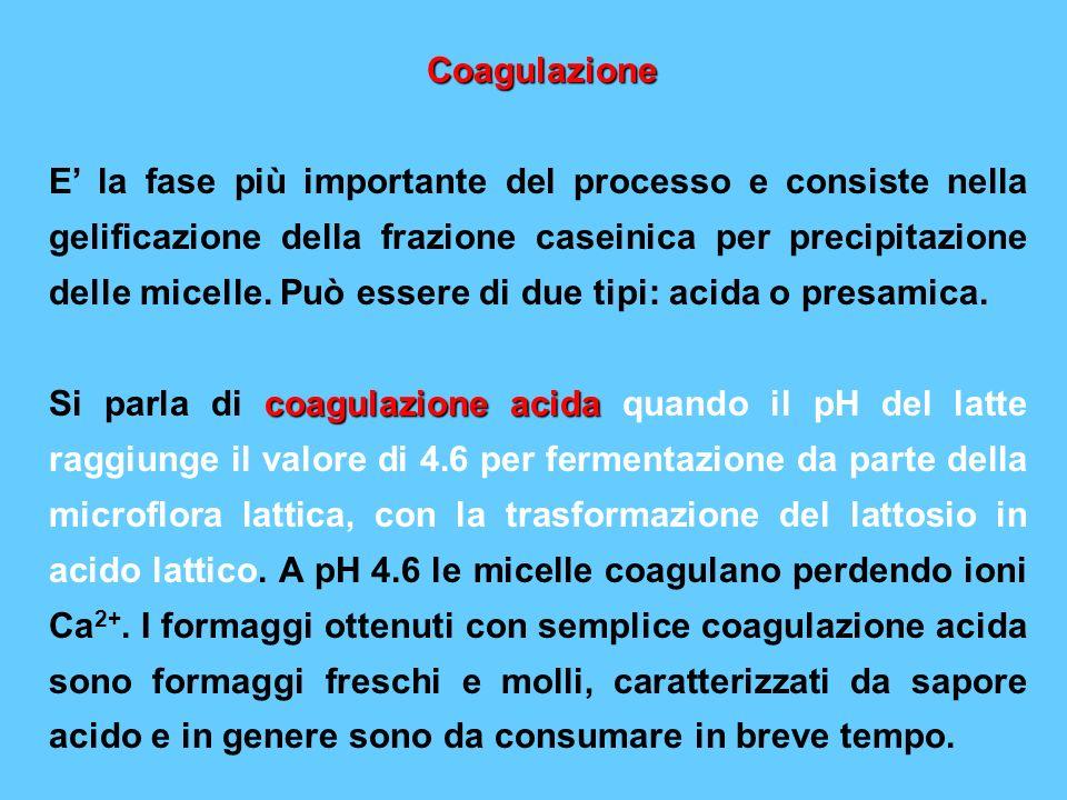 Coagulazione E la fase più importante del processo e consiste nella gelificazione della frazione caseinica per precipitazione delle micelle. Può esser