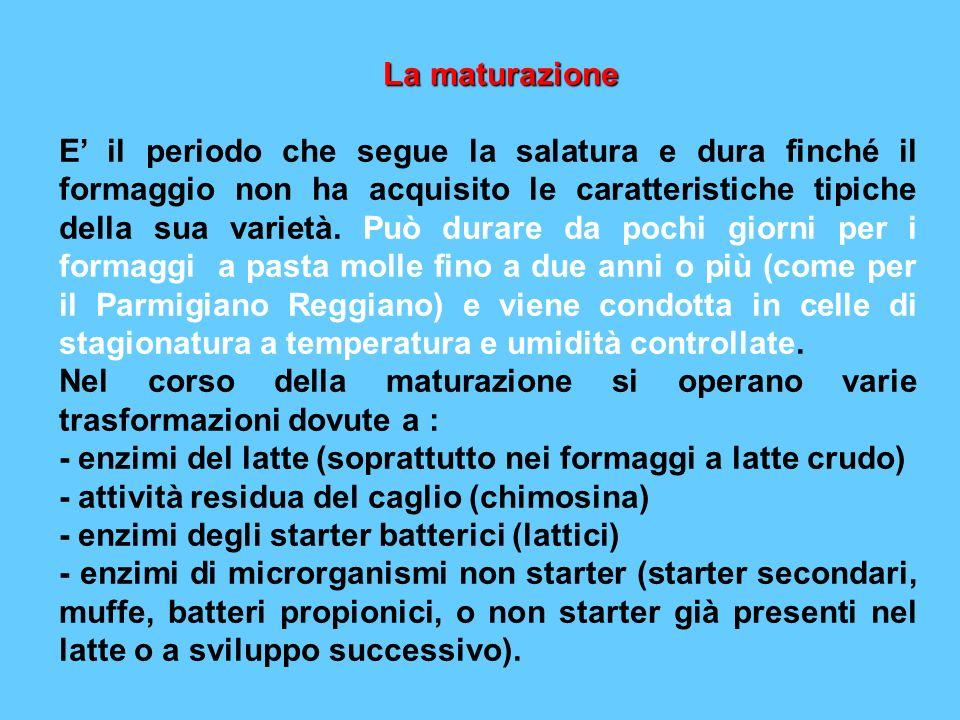 La maturazione La maturazione E il periodo che segue la salatura e dura finché il formaggio non ha acquisito le caratteristiche tipiche della sua vari