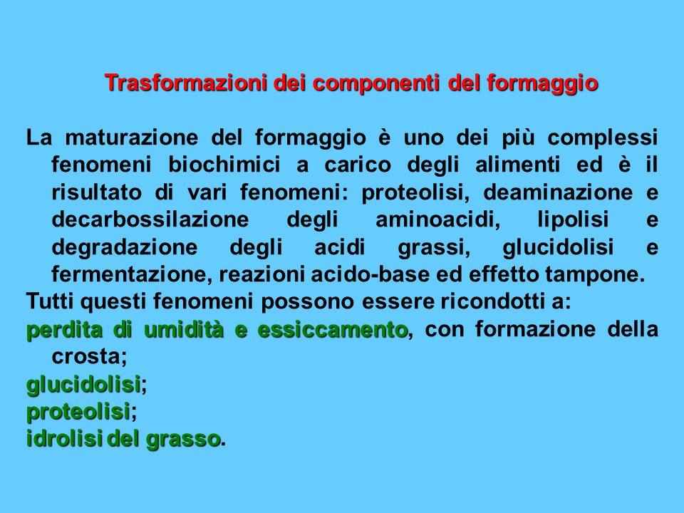 Trasformazioni dei componenti del formaggio La maturazione del formaggio è uno dei più complessi fenomeni biochimici a carico degli alimenti ed è il r