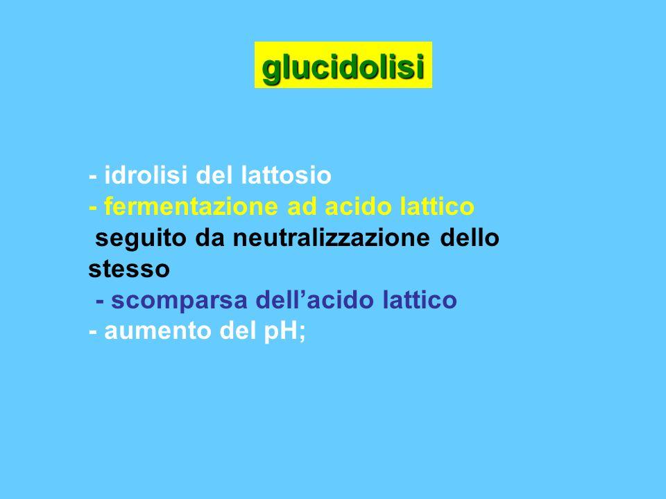 - idrolisi del lattosio - fermentazione ad acido lattico seguito da neutralizzazione dello stesso - scomparsa dellacido lattico - aumento del pH; gluc