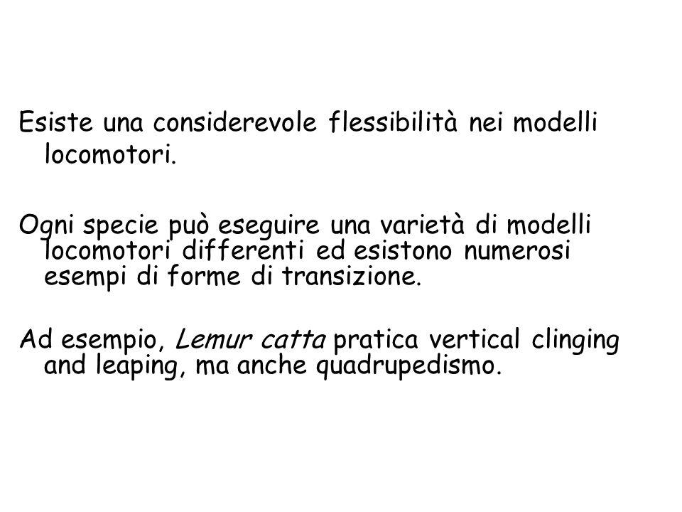 Esiste una considerevole flessibilità nei modelli locomotori. Ogni specie può eseguire una varietà di modelli locomotori differenti ed esistono numero
