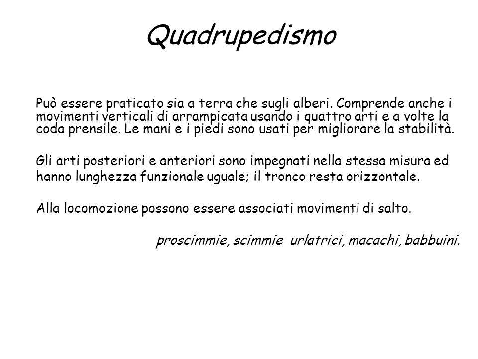 Quadrupedismo Può essere praticato sia a terra che sugli alberi. Comprende anche i movimenti verticali di arrampicata usando i quattro arti e a volte