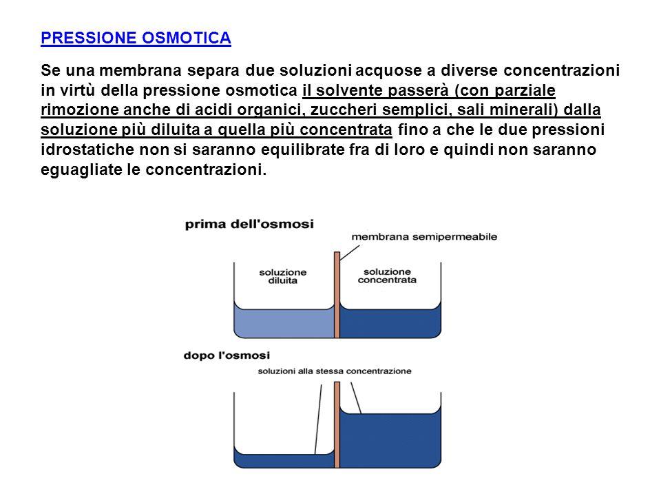 Osmosi (Trasporto Attivo): la pressione osmotica (pressione idrostatica) è la forza motrice che permette il passaggio del solvente dalla soluzione più diluita verso quella più concentrata e non del soluto (ad eccezione di ioni, sali minerali e acidi organici, zuccheri semplici, molecole < millesimo di µ).