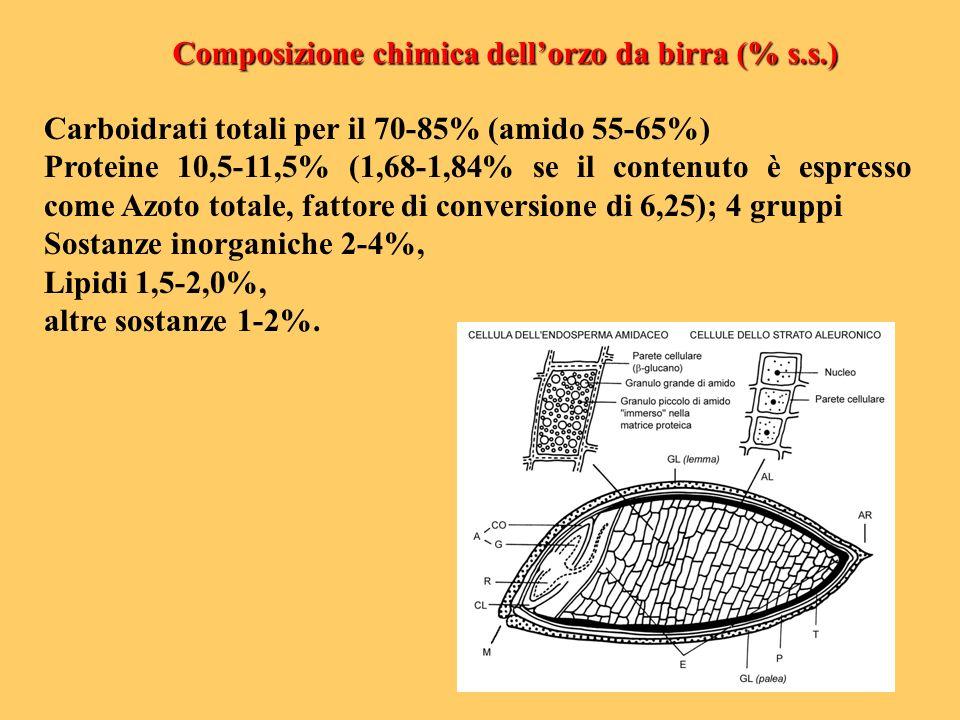Carboidrati totali per il 70-85% (amido 55-65%) Proteine 10,5-11,5% (1,68-1,84% se il contenuto è espresso come Azoto totale, fattore di conversione d