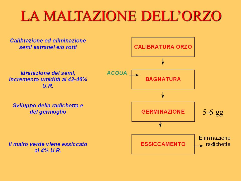 LA MALTAZIONE DELLORZO 5-6 gg