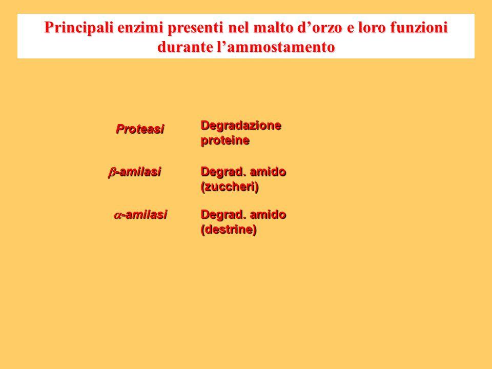 Proteasi -amilasi -amilasi Degradazione proteine Degrad. amido (zuccheri) Degrad. amido (destrine) Principali enzimi presenti nel malto dorzo e loro f
