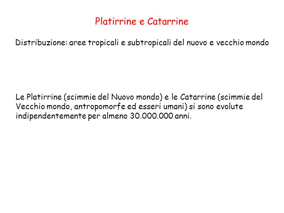 Distribuzione: aree tropicali e subtropicali del nuovo e vecchio mondo Platirrine e Catarrine Le Platirrine (scimmie del Nuovo mondo) e le Catarrine (
