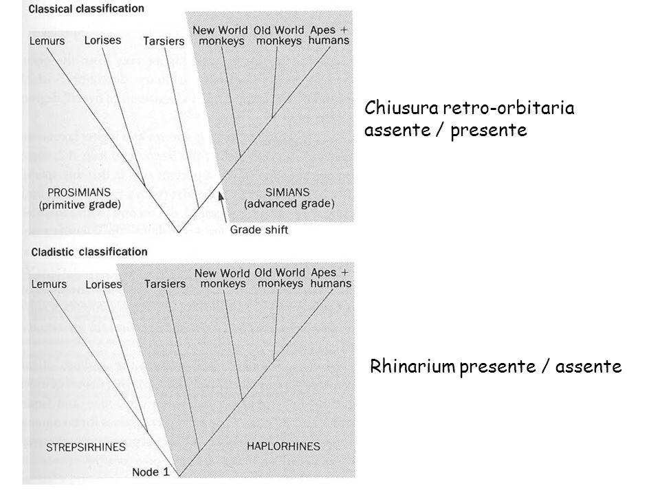Rhinarium presente / assente Chiusura retro-orbitaria assente / presente