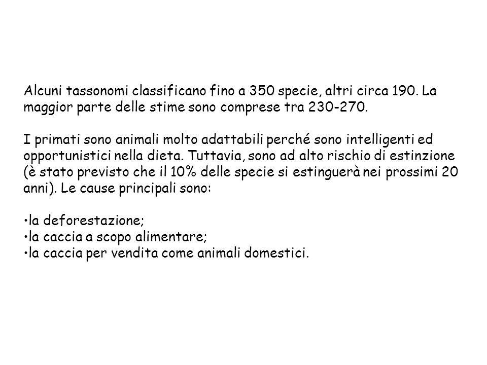 Alcuni tassonomi classificano fino a 350 specie, altri circa 190. La maggior parte delle stime sono comprese tra 230-270. I primati sono animali molto