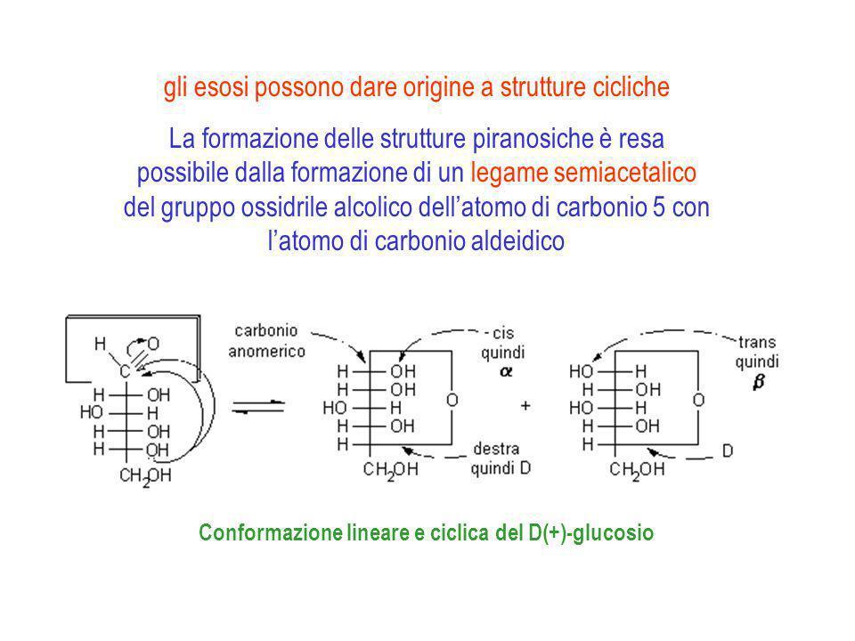 Glucosio α-D-glucosio β-D-glucosio 36% 64% 0.1%