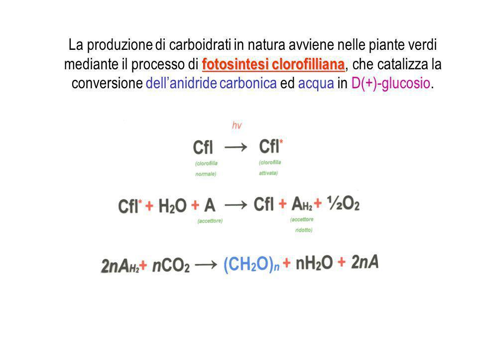 fotosintesi clorofilliana La produzione di carboidrati in natura avviene nelle piante verdi mediante il processo di fotosintesi clorofilliana, che cat