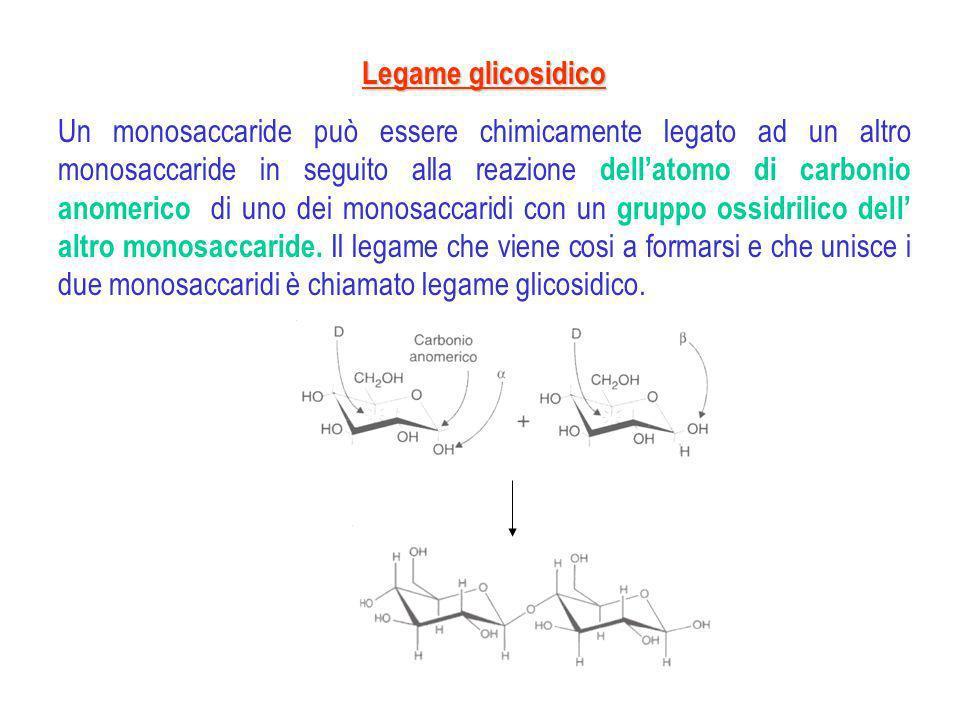 DisaccarideMonomeriTipo di legame coinvolto Caratteristiche Maltosioglucosio (1 4) -glicosidico riducenti, subiscono la mutarotazione Isomaltosioglucosio (1 6) -glicosidico cellobiosioglucosio (1 4) -glicosidico Lattosio glucosio e galattosio (1 4) -glicosidico Saccarosio glucosio e fruttosio (1 2), -diglicosidico non-riducenti, non subiscono la mutarotazione Trealosioglucosio (1 1), -diglicosidico Disaccaridi