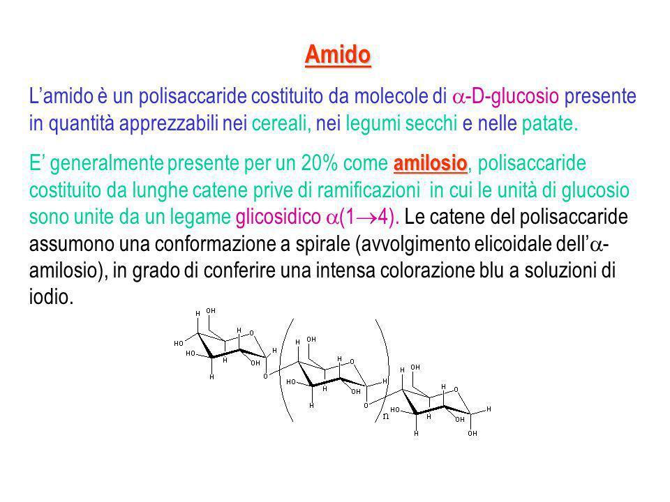 amilopectina Il restante 80%, chiamato amilopectina, è costituito da catene polisaccaridiche altamente ramificate.