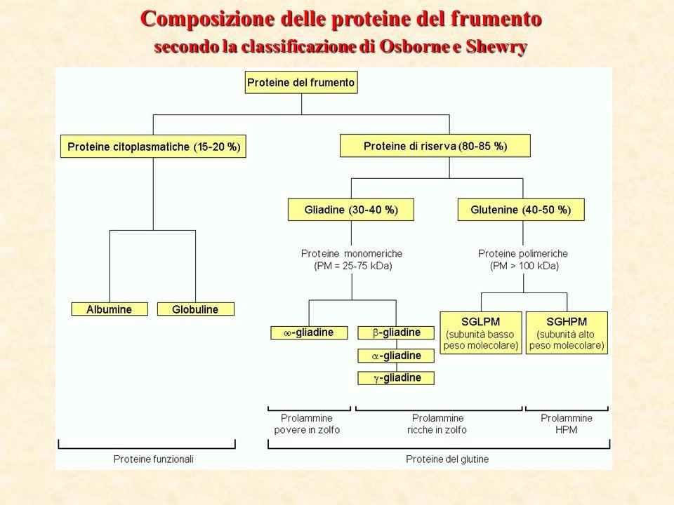 Composizione delle proteine del frumento secondo la classificazione di Osborne e Shewry