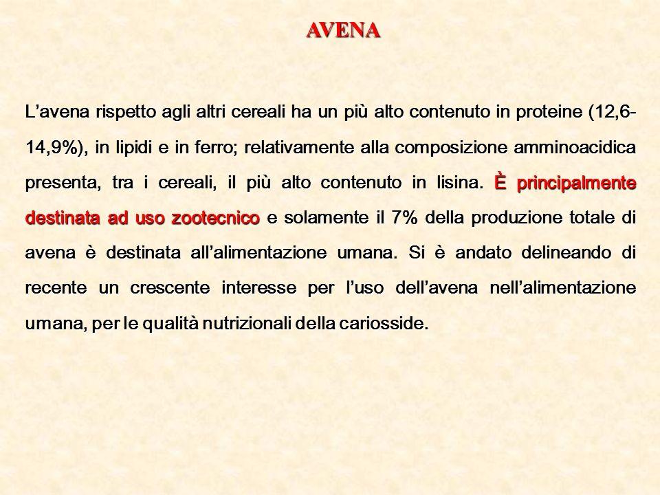 AVENA Lavena rispetto agli altri cereali ha un più alto contenuto in proteine (12,6- 14,9%), in lipidi e in ferro; relativamente alla composizione amm