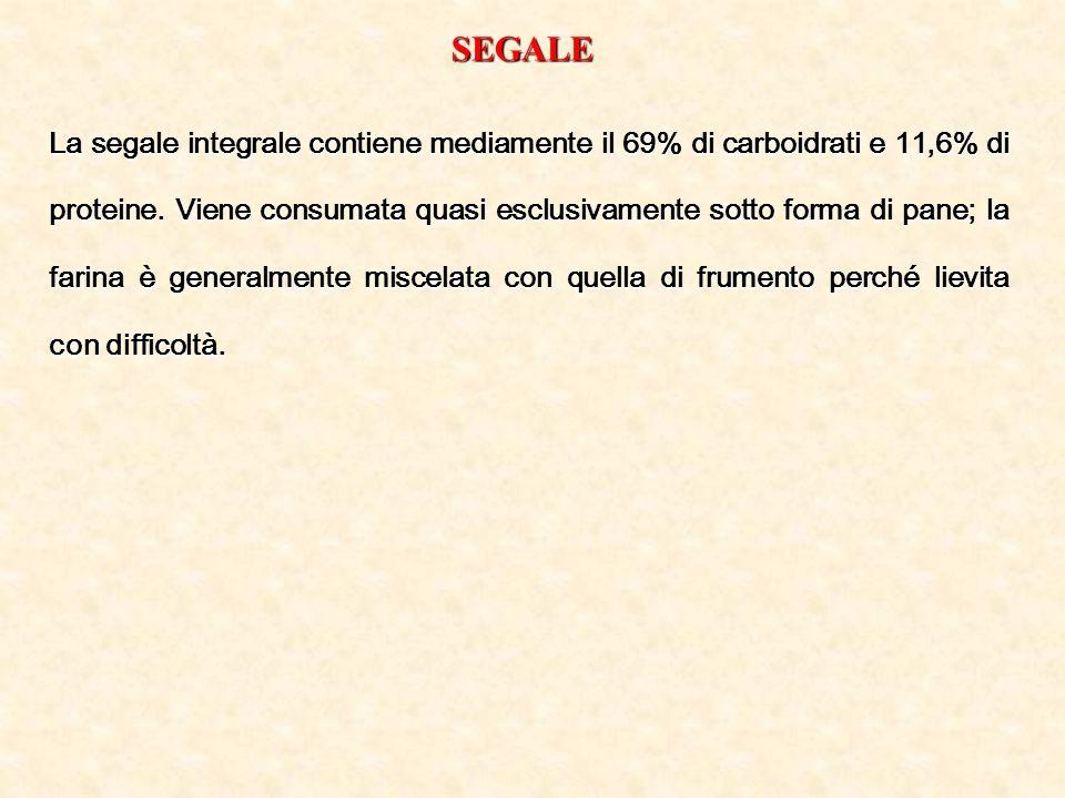 SEGALE La segale integrale contiene mediamente il 69% di carboidrati e 11,6% di proteine. Viene consumata quasi esclusivamente sotto forma di pane; la