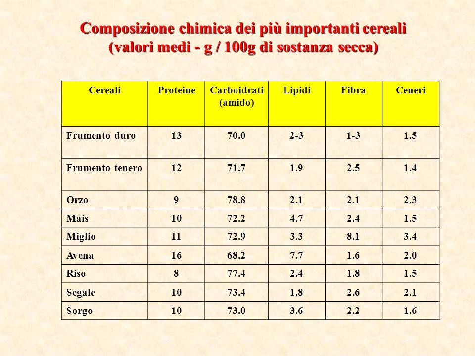 SEGALE La segale, come lavena, predilige i climi freddi del nord ed è il cereale che germoglia alla temperatura più bassa.