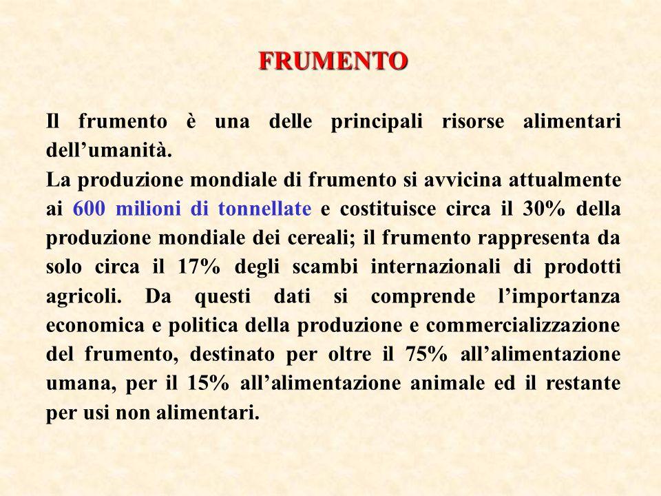 La selezione operata dalluomo nel corso dei secoli ha riguardato essenzialmente i due principali tipi di frumento, il T.