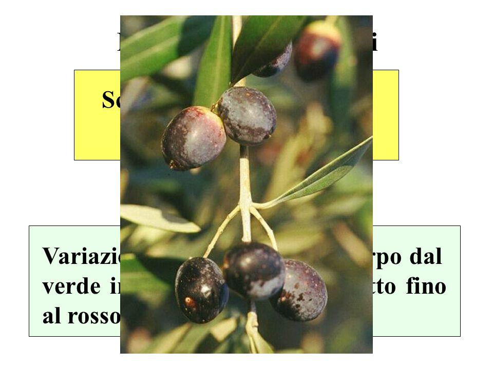 Maturazione dei frutti Variazioni del colore dellepicarpo dal verde intenso al giallo al violetto fino al rosso vinoso o nero corvino Scomparsa delle clorofille Accumulo di antociani