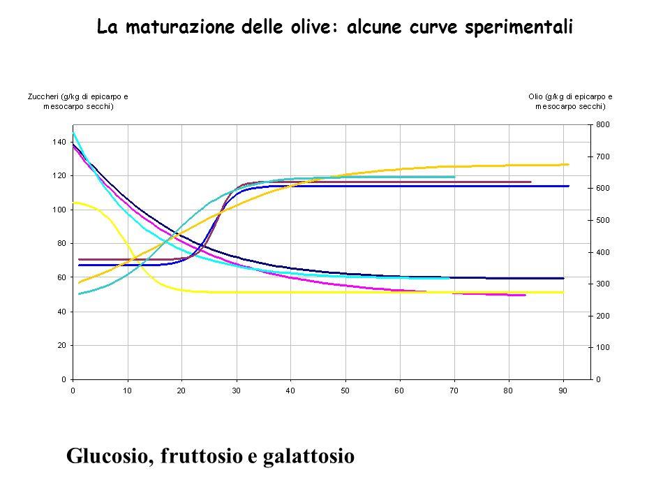 La maturazione delle olive: alcune curve sperimentali Glucosio, fruttosio e galattosio