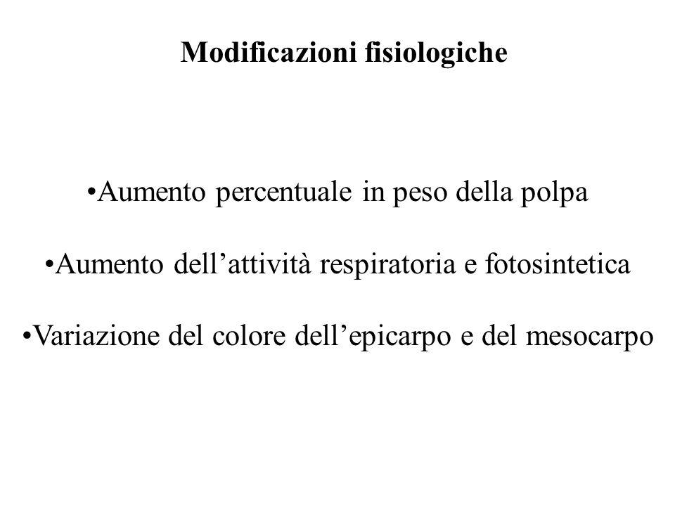 Aumento percentuale in peso della polpa Aumento dellattività respiratoria e fotosintetica Variazione del colore dellepicarpo e del mesocarpo Modificazioni fisiologiche