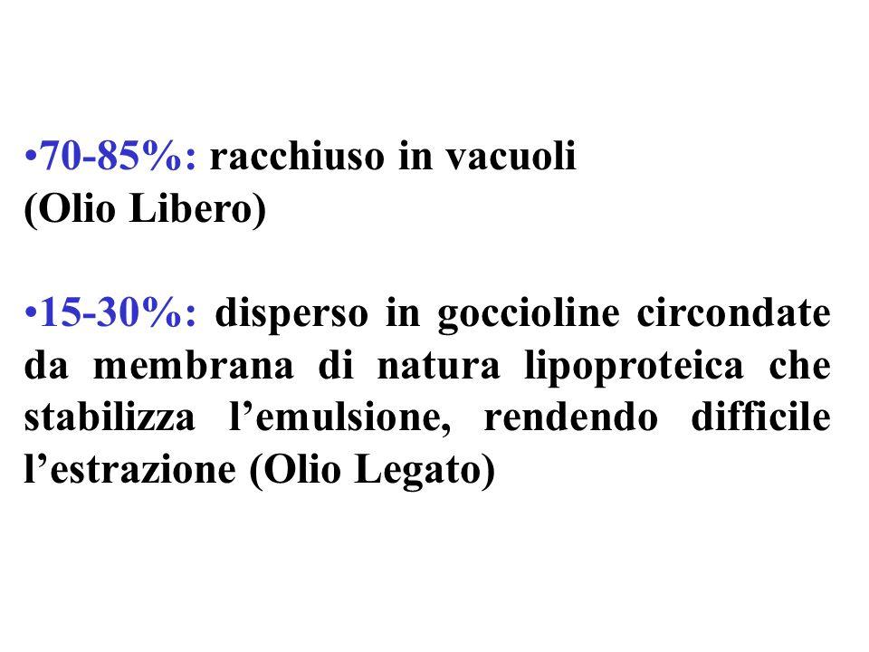 70-85%: racchiuso in vacuoli (Olio Libero) 15-30%: disperso in goccioline circondate da membrana di natura lipoproteica che stabilizza lemulsione, rendendo difficile lestrazione (Olio Legato)