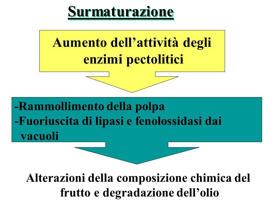 -Rammollimento della polpa -Fuoriuscita di lipasi e fenolossidasi dai vacuoli Aumento dellattività degli enzimi pectolitici Surmaturazione Alterazioni della composizione chimica del frutto e degradazione dellolio